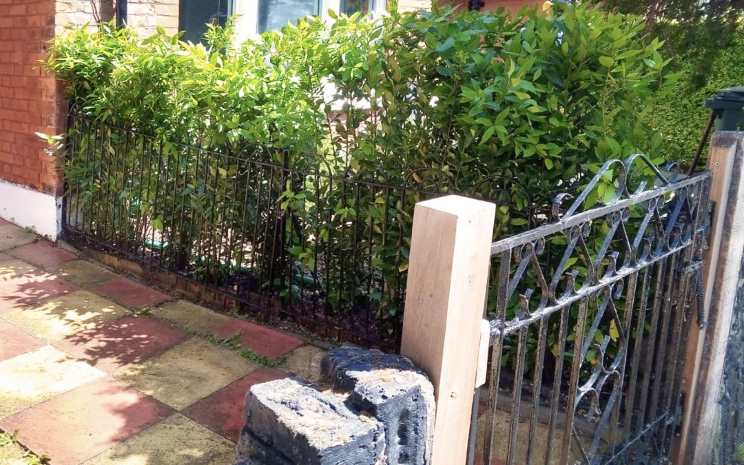 Buxus Featured