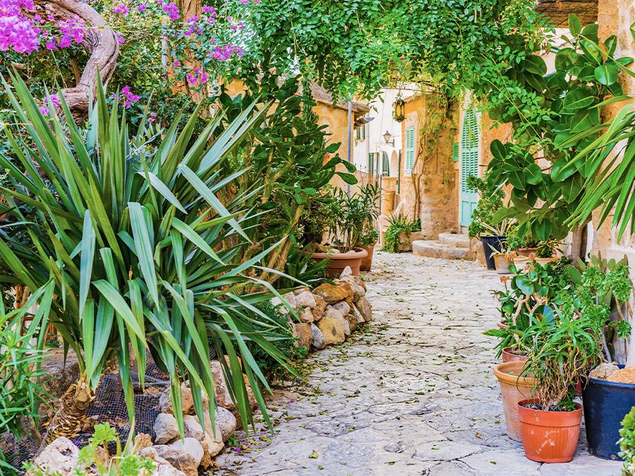 Mediterranean Mezze